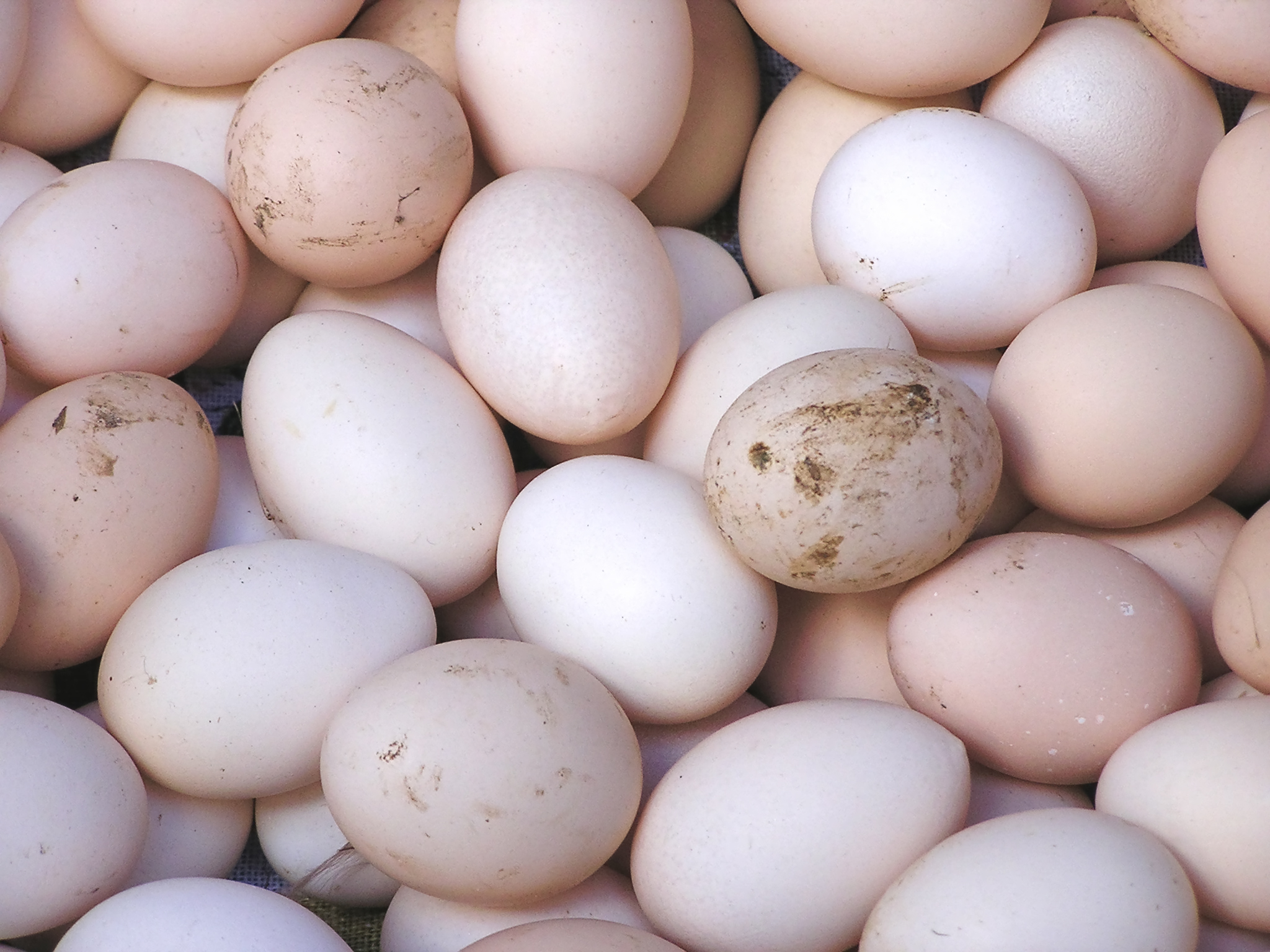 The Truth About Eating Raw Eggs 8