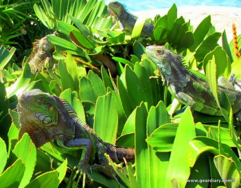 Amazing Aruba!  Amazing Aruba!  Amazing Aruba!  Amazing Aruba!  Amazing Aruba!  Amazing Aruba!  Amazing Aruba!  Amazing Aruba!  Amazing Aruba!  Amazing Aruba!  Amazing Aruba!  Amazing Aruba!  Amazing Aruba!  Amazing Aruba!  Amazing Aruba!  Amazing Aruba!  Amazing Aruba!  Amazing Aruba!  Amazing Aruba!  Amazing Aruba!  Amazing Aruba!  Amazing Aruba!  Amazing Aruba!  Amazing Aruba!  Amazing Aruba!  Amazing Aruba!  Amazing Aruba!  Amazing Aruba!  Amazing Aruba!  Amazing Aruba!  Amazing Aruba!  Amazing Aruba!  Amazing Aruba!  Amazing Aruba!  Amazing Aruba!  Amazing Aruba!  Amazing Aruba!  Amazing Aruba!  Amazing Aruba!  Amazing Aruba!  Amazing Aruba!  Amazing Aruba!  Amazing Aruba!  Amazing Aruba!  Amazing Aruba!
