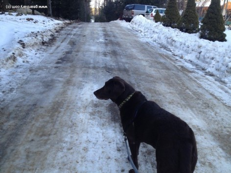 Icy dirt road, walking the dog wearing the Proterra Sport.