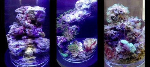 PJ Reef Micro Saltwater Coral Habitat for the Wannabe Marine Biologist in All of Us