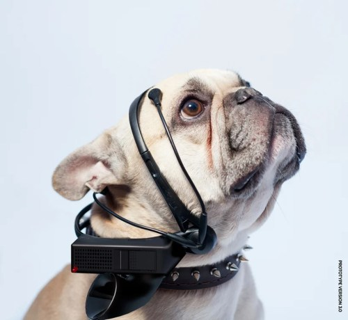 'No More Woof' Looks to Translate Dog Thoughts to Words, Raise Money on IndieGogo