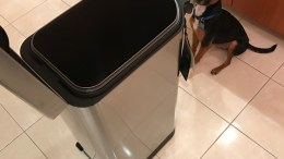 Throw Away That Dog Food Bag and Get Simplehuman's Pet Food Can