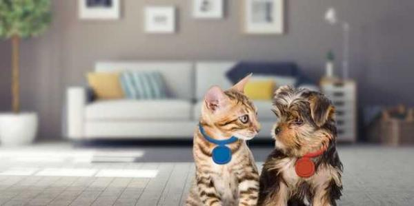 Never Lose Your Pet Again with the Scollar