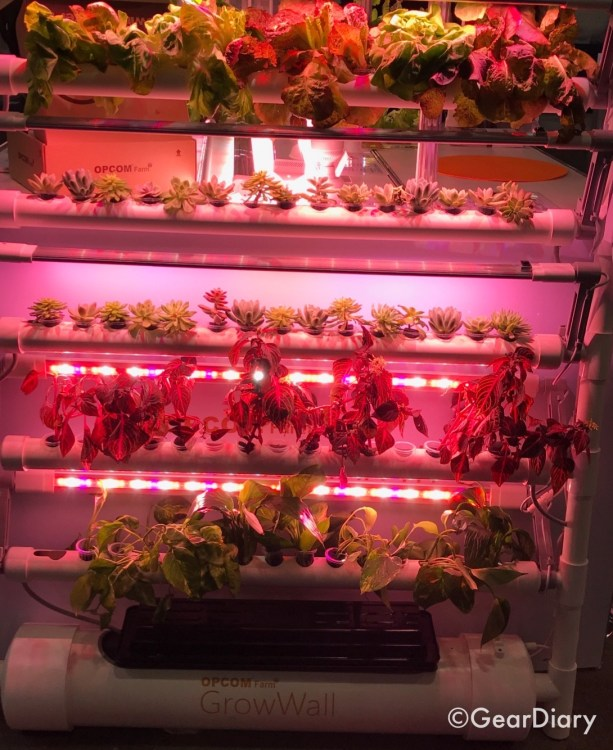 Indoor Gardening Home Tech Health Tech CES   Indoor Gardening Home Tech Health Tech CES   Indoor Gardening Home Tech Health Tech CES   Indoor Gardening Home Tech Health Tech CES   Indoor Gardening Home Tech Health Tech CES   Indoor Gardening Home Tech Health Tech CES   Indoor Gardening Home Tech Health Tech CES   Indoor Gardening Home Tech Health Tech CES