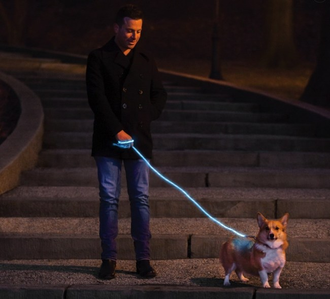 You and Your Dog Will Light Up the Night with Nitey Leash