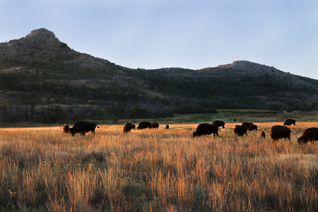 In Your Backyard: Wichita Mountains, Oklahoma