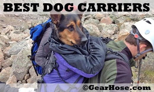 best dog carriers