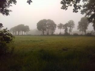Near Aurich (DE)