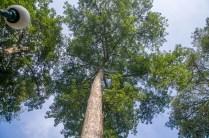 tinggi banget ya pohonnya