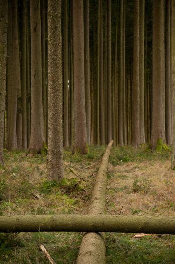 Wald/Kreuz