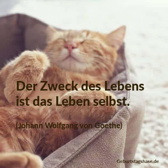 Susse Katzen Singen Happy Youtube