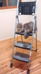 Taala hanging out on the stepladder