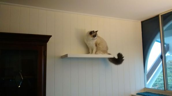 Elska on one of the floating shelves