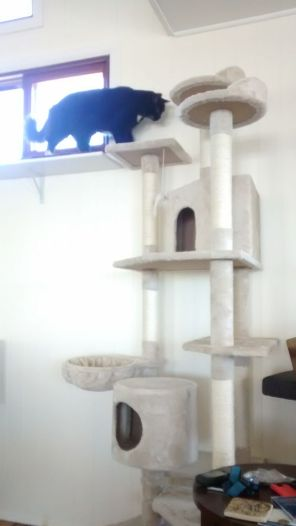 Cookie moves from catsill to cat tree