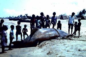 Der grosse Fang Calangute 1983 (c) Corinne I. Heitz
