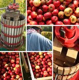 pressage-pommes.jpg