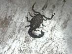 bugs (4)