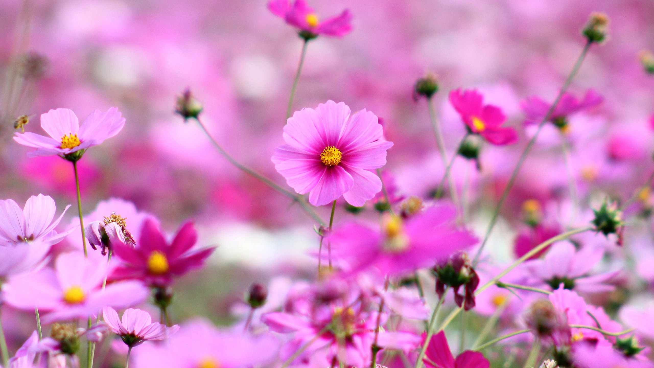 Best Collection Beautiful Flowers Wallpapers For Your Desktop