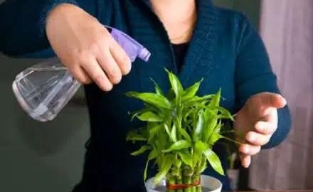 kako-zaljevati-biljku-ako-vas-nema-doma