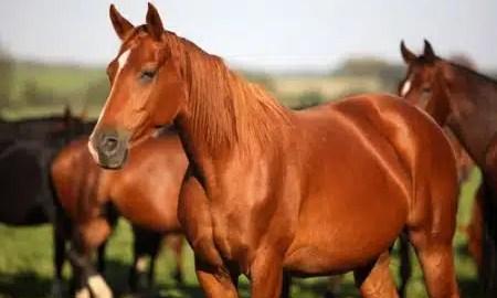 kako-su-konji-pripitomljeni