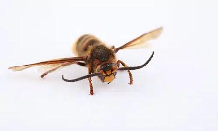 ubod-insekata1