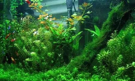 kako-odrzavati-biljke-u-akvariju