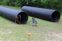 US Canine Biathlon (36)
