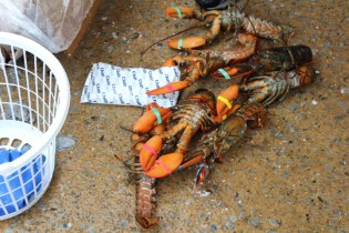 Lobsterfest 2019 (22)