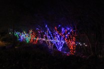 Zoolight Safari 2019 (13)