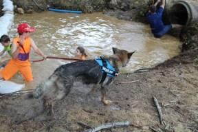 US Canine Biathlon (21)