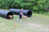 US Canine Biathlon (40)