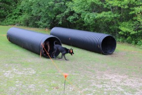 US Canine Biathlon (43)