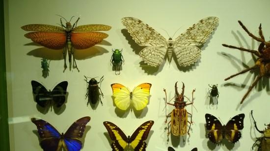 Observez le papillon blanc-beige dans le coin supérieur droit. Selon vous, est-il poilu?
