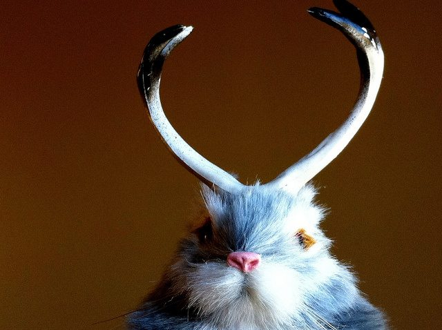 Easter Bunny Science: Studies Show How Kids Sort Fantasy From Reality