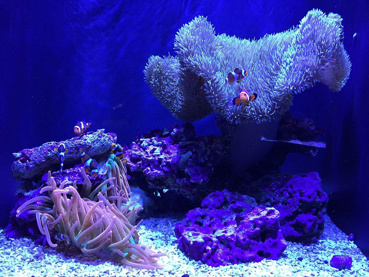 Octonauts-Nemo