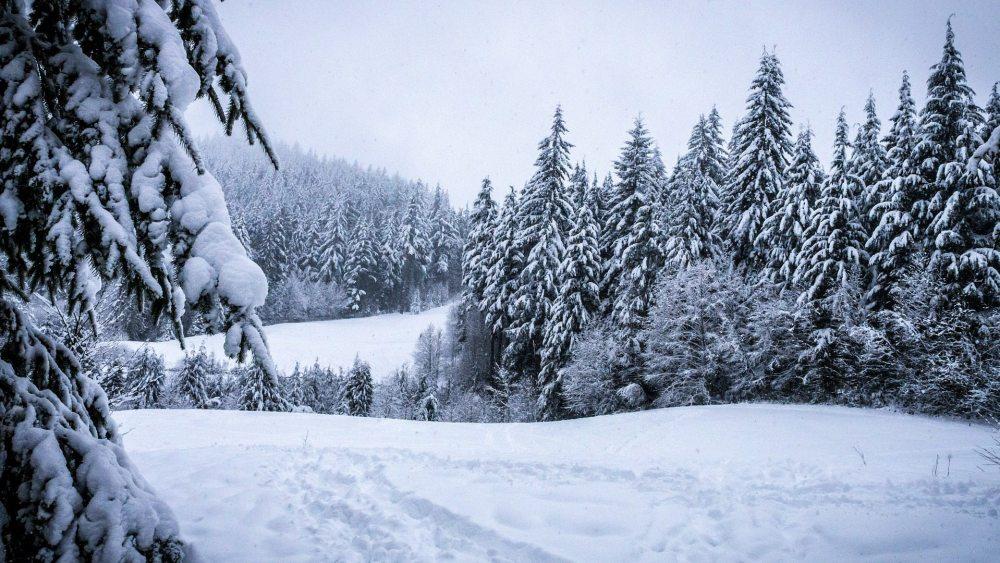winter-273403_1920.jpg?resize=1000%2C563