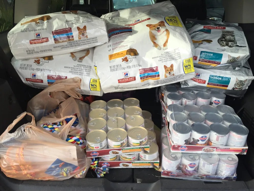 What the back of our car looked like with $500 worth of pet food and toys.