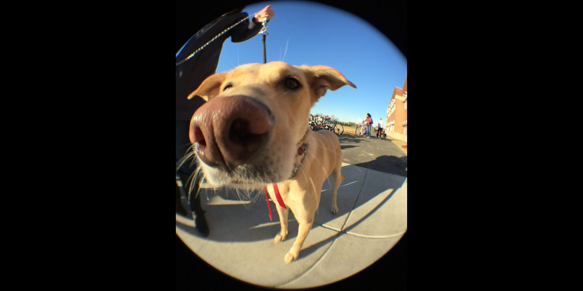 A dog closeup with the fisheye lens, resulting in exaggerated perspective on its face.