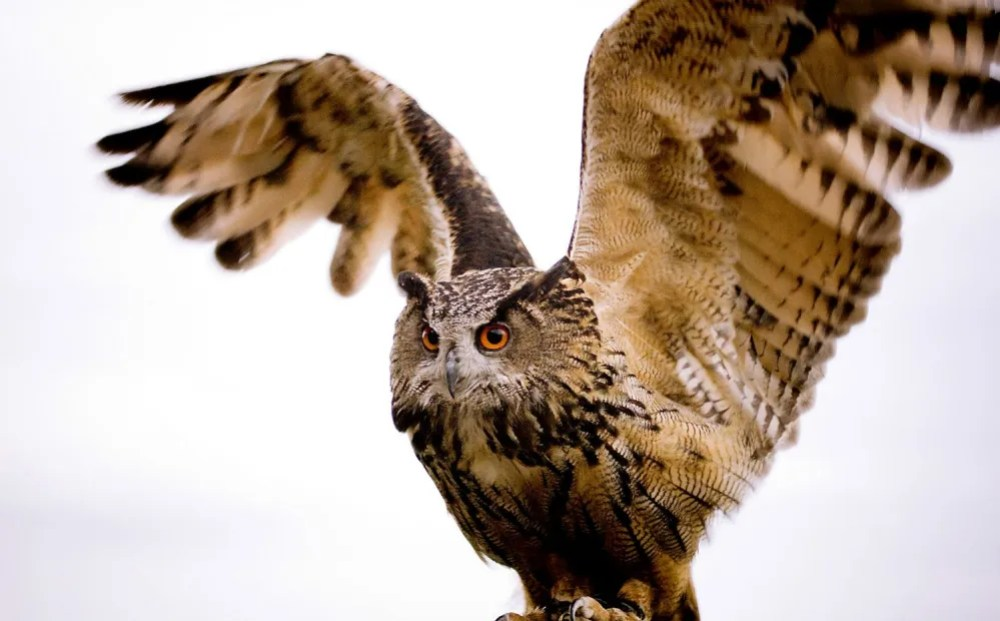 superb_owl_2016