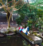 Ashitaka rests by the pond. Photo by Sarah James.