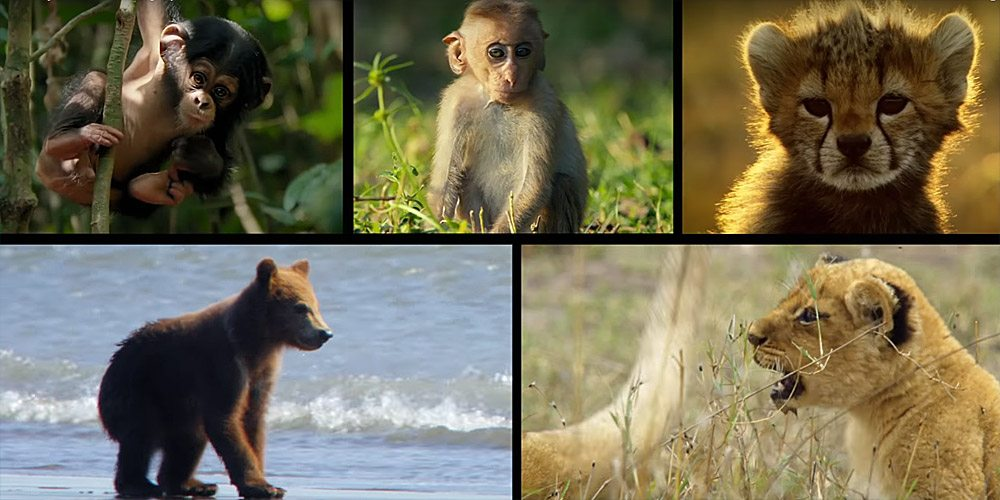 Disneynature's 'Growing Up Wild' on Digital HD