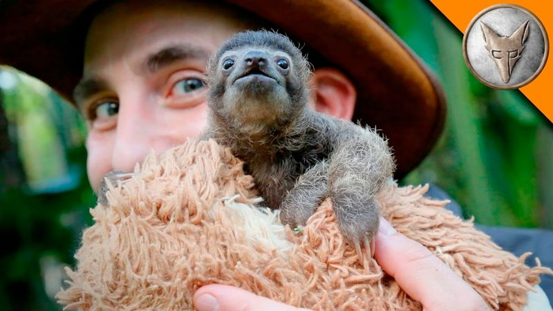 Coyote Peterson and a Baby Sloth