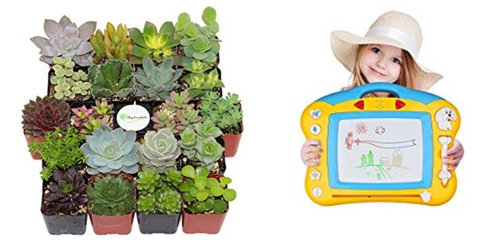 Save Big on Succulents for Your Drought Tolerant Garden; Get a Magnetic Drawing Board!
