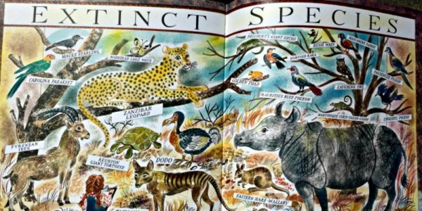 Delight Animal Lovers with 'Many: The Diversity of Life on Earth'