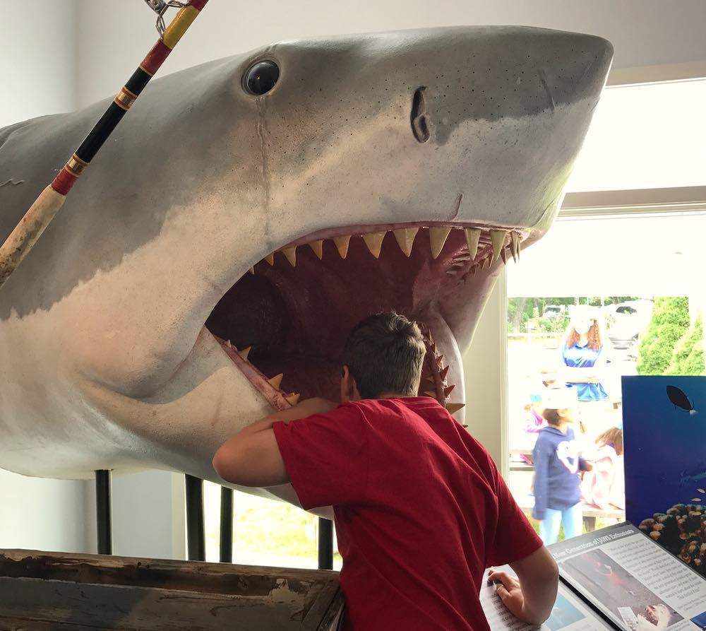 GeekDad Visits The Atlantic White Shark Conservancy On