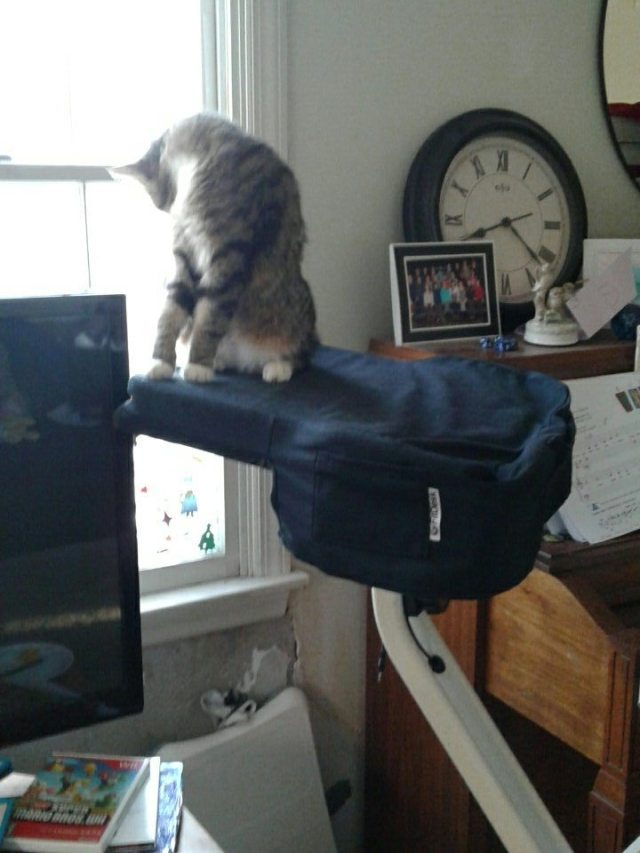 Cat on desk of exercise bike.