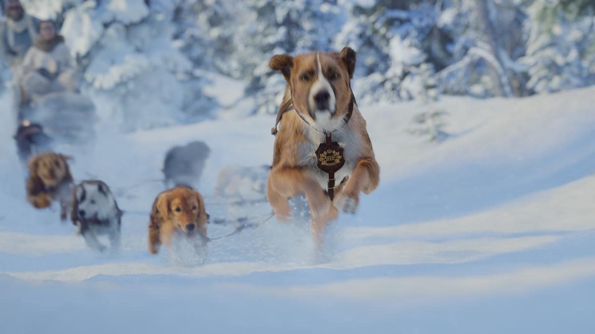 Dogsled team in 'The Call of the Wild'