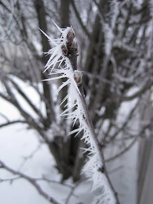 Rime Ice or Hoar Frost?  You Be the Judge!