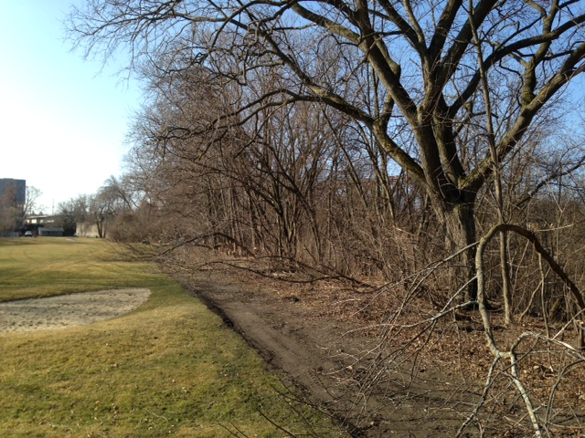 Original tree line at beginning of clearing project, with trees and brush encroaching all the way onto the path.
