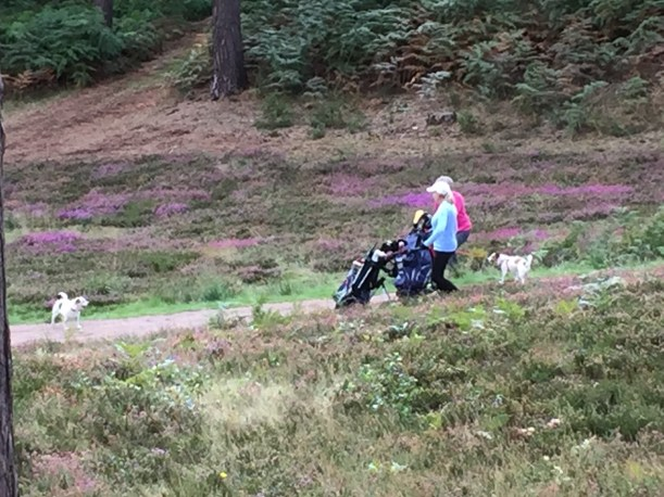 Players enjoying a round with their dogs at The Berkshire